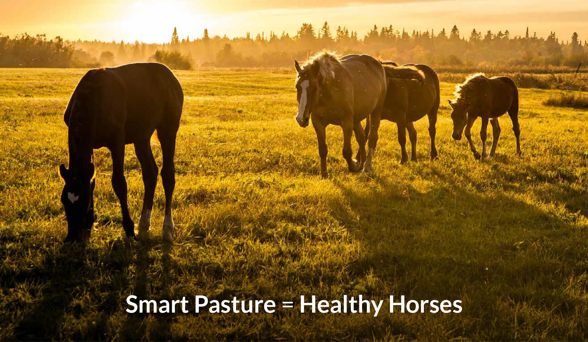 Healthy pastures with Ragan & Massey