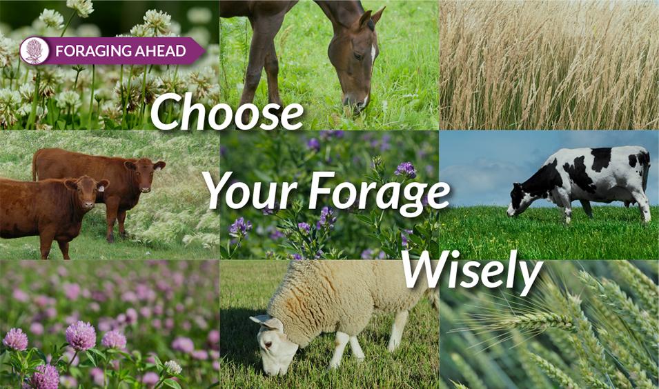 Forage Selection by Ragan & Massey