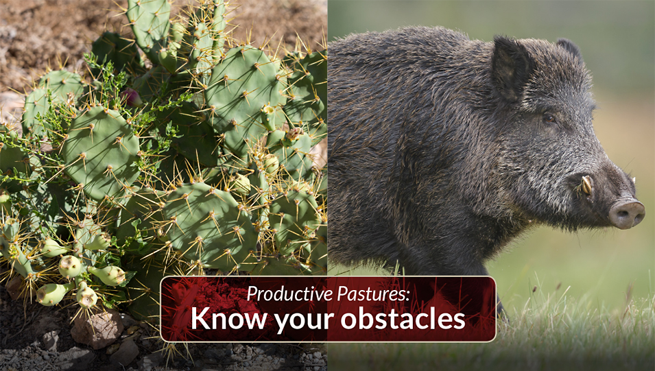 Productive pastures: Know your obstacles when establishing pasture