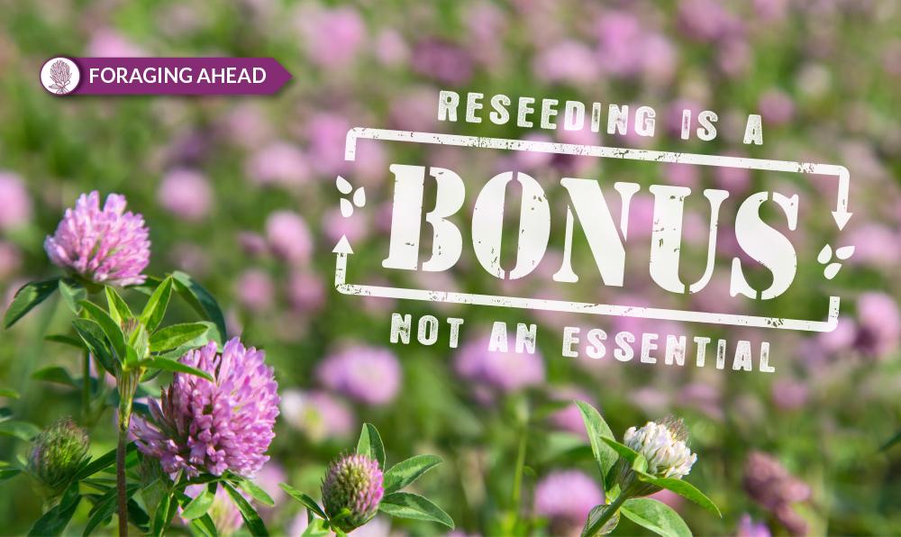 Reseeding forage crops