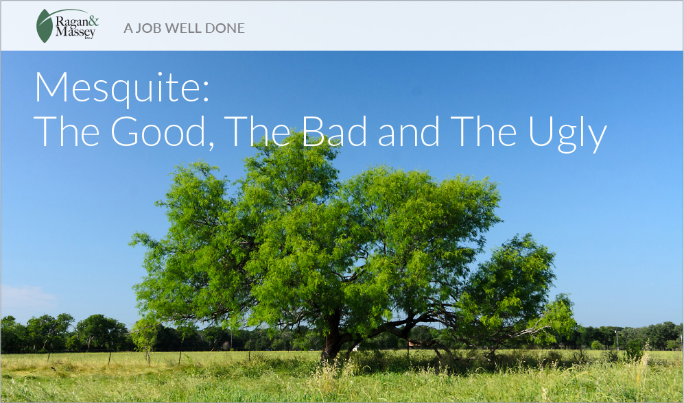 A Job Well Done -Mesquite