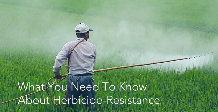 What You Need To Know About Herbicide Resistance