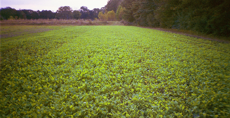 Food Plots Are Easy