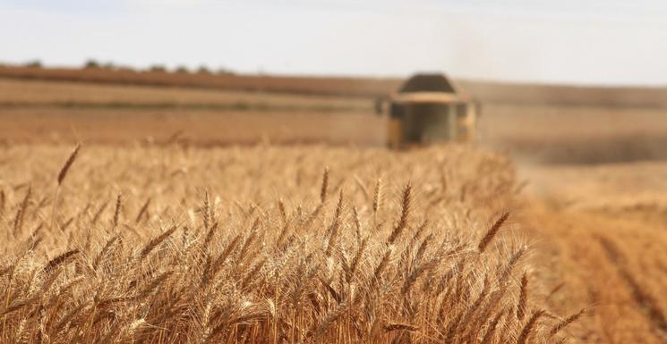 Preparing For Harvest