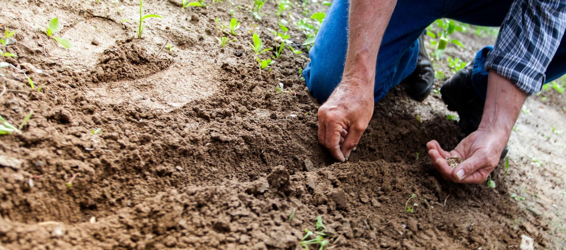 Fertilizing Without Soil Sample