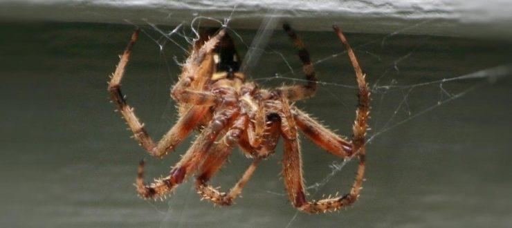 How To Prevent A Winter Pest Problem