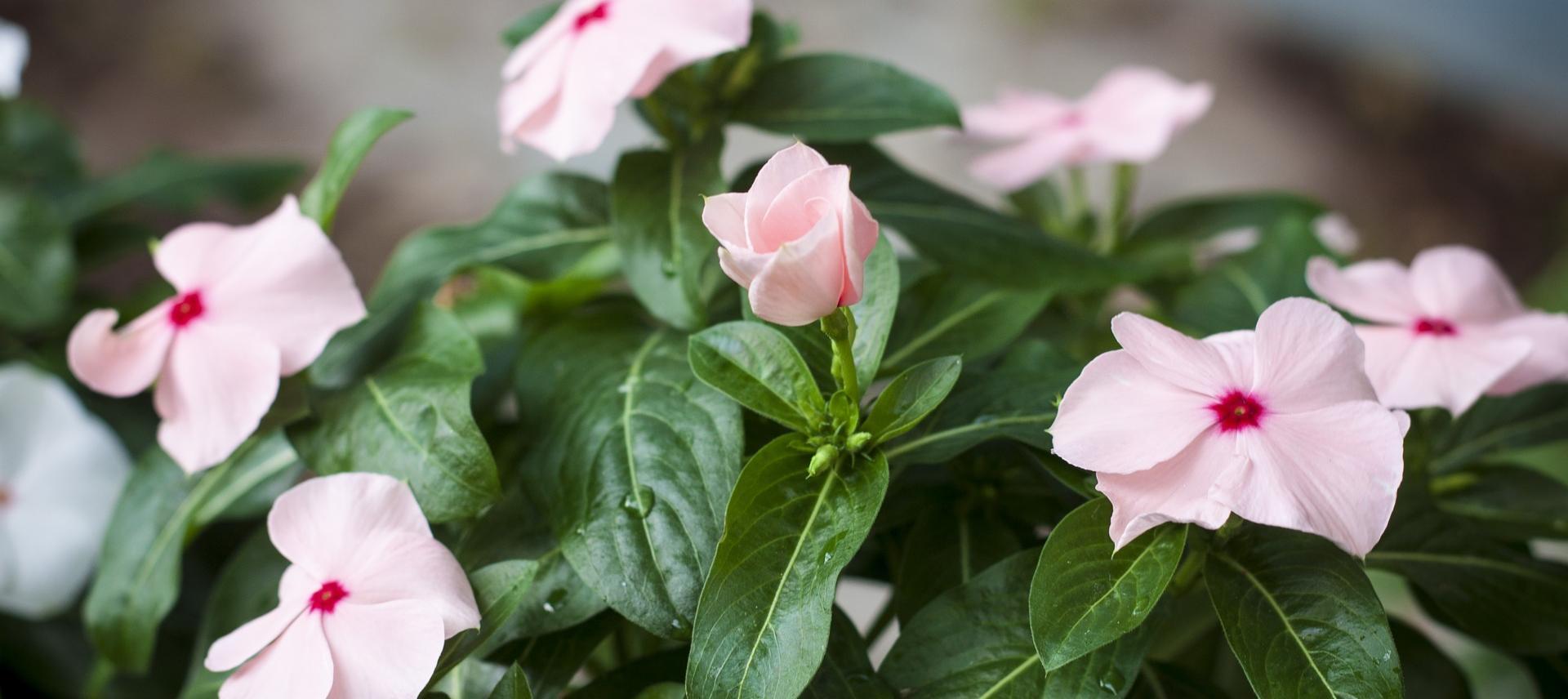 6 Easy Spring Garden Prep Tips
