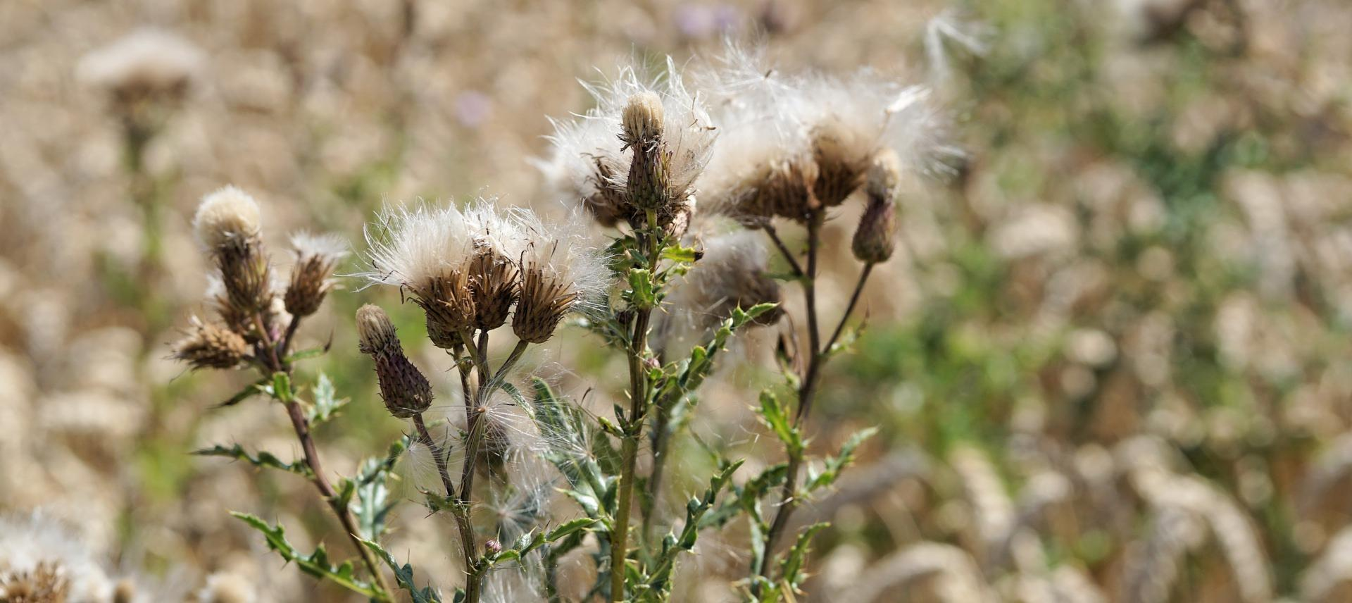 The 4 Most Effective Ways To Kill Weeds In Your Yard
